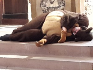 Der Bär träumt